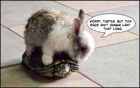 Your website needs more hare, less tortoise.